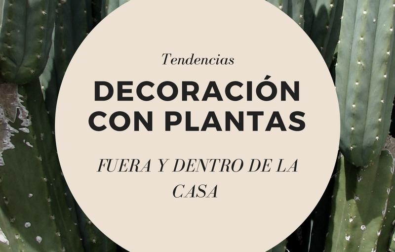 plantasparadecorar