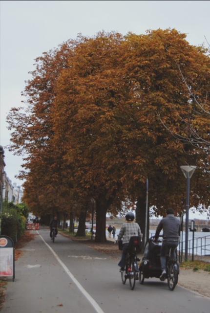 6 parques de Copenhague para ver los colores delotoño